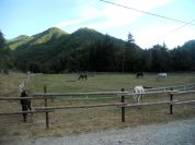 Riding Center - Coop. Agroippoituristica Ridolla