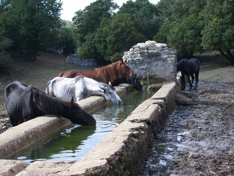 Fonte Campitello drinking trough