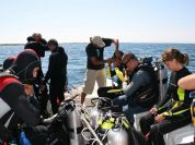 Diving activities and Courses