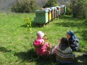Visit to the didactic apiary