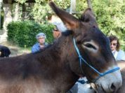 A day in the Park with donkeys
