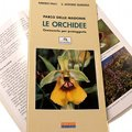 Le Orchidee