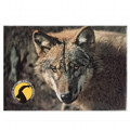 Photographic magnete of the Gran Paradiso National Park - subjects: wolf