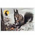 Photographic magnete of the Gran Paradiso National Park - subjects: red squirrel