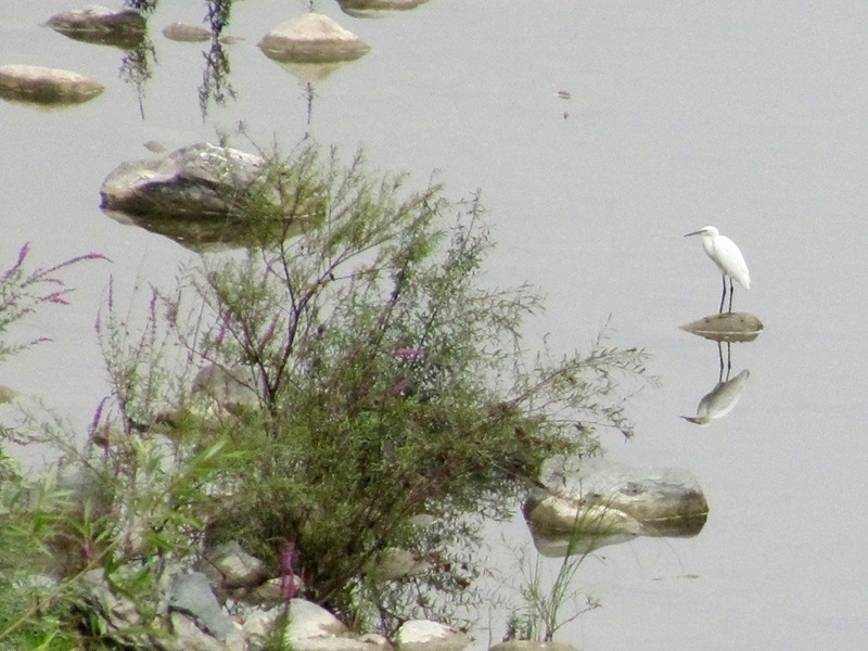 Birds along Bormida river