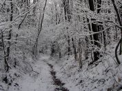 Snow-clad trails