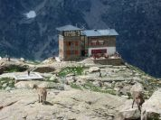 Mountain Hut and wildlife - Rifugio Franco Remondino