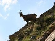 Wildlife - Rifugio Franco Remondino