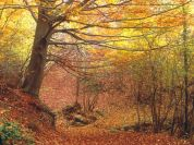 Woodland in autumn