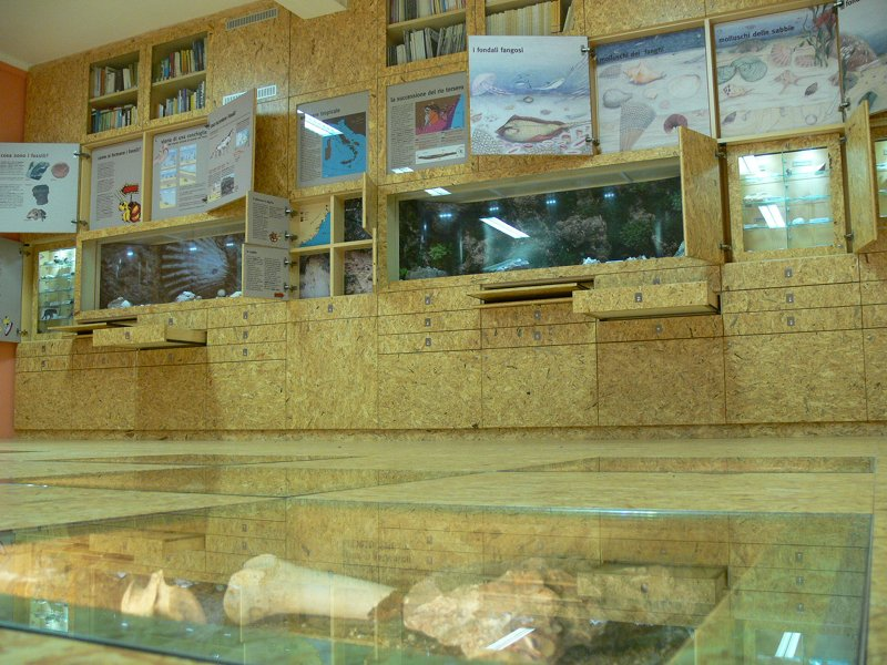 Silvio Lai Paleontological Museum - Exhibit hall
