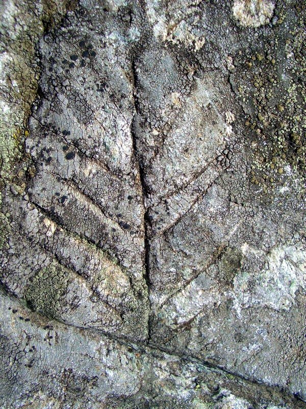 Tree-shaped engraving at Alpe Sassoledo