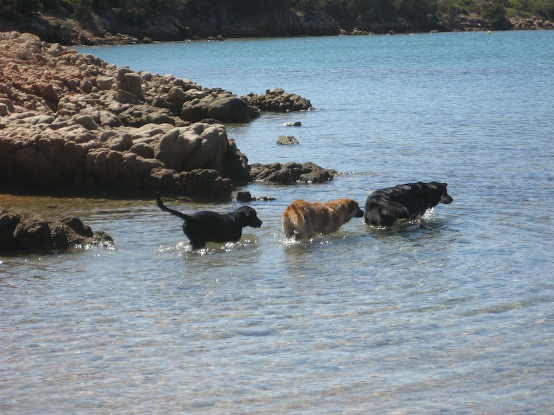 The water stretch in front of the beach for dogs