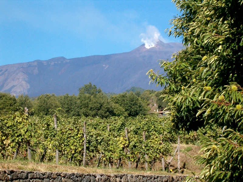 Vineyard with Etna in the background