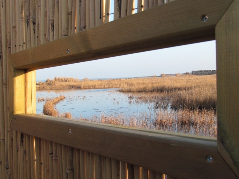 View of the wetland from a sighting point
