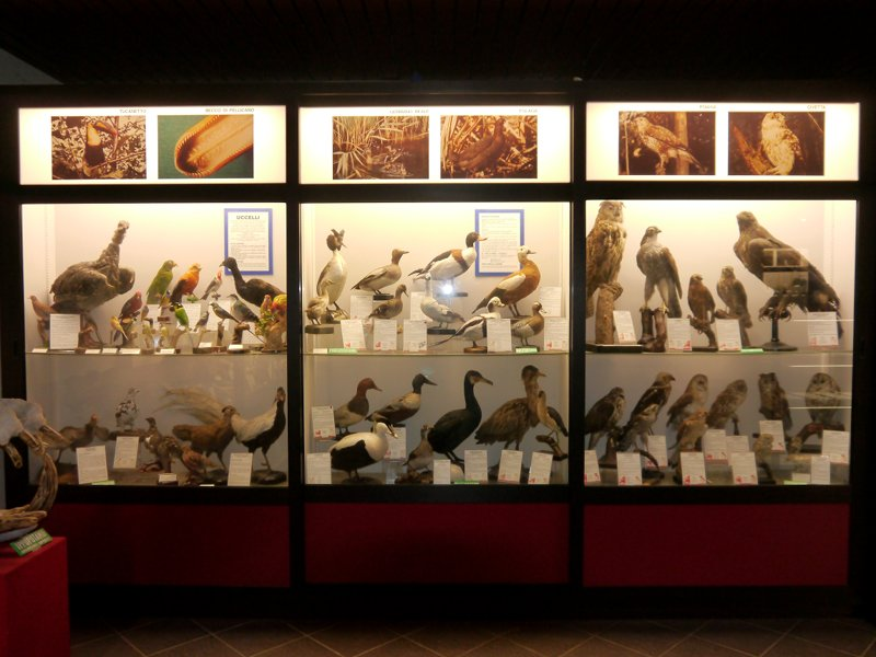 Oiseaux taxidermisés - musée scientifique Don Bosco à Lombriasco