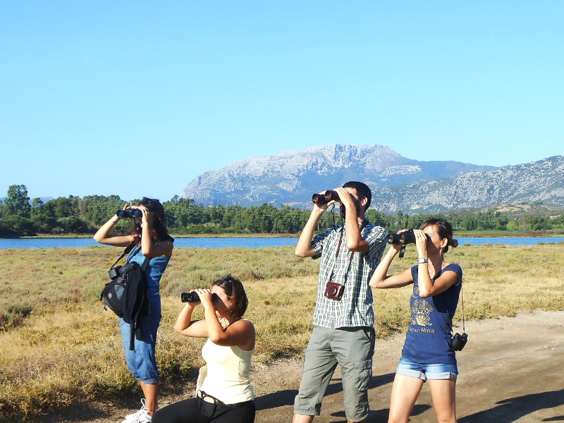 Birdwatching Stagno Longu